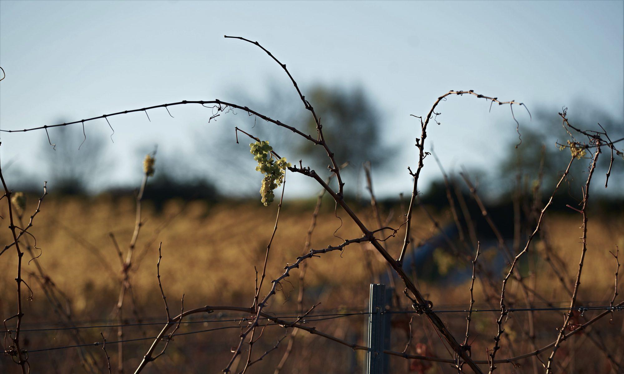 Weingut Friedhelm Hill